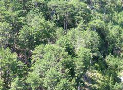 В лесах Новосибирской области продолжают устанавливать видеокамеры