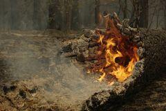 В Тольятти обустраивают леса