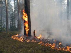 Камеры видеонаблюдения появятся в лесах Новосибирска