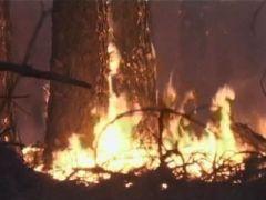 В Ленинградской области пытаются превентивно бороться с пожарами