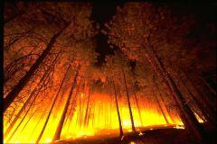 Новая система предупреждения пожаров появится в Самарской области